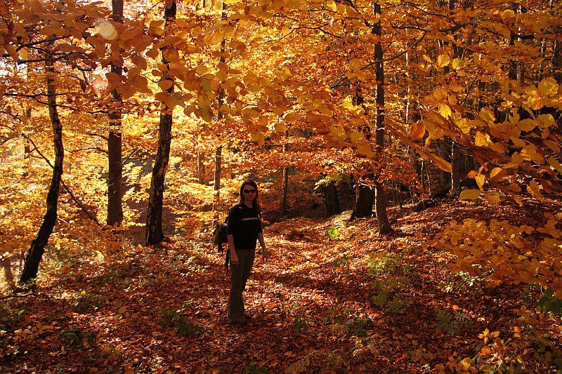 Jesień na Gibasach